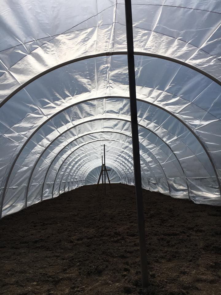 Caterpillar tunnel for plants