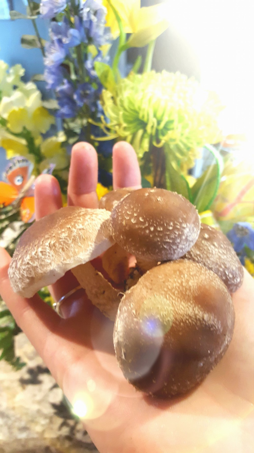 A Mushroom Farmer Growing Oyster Mushrooms | Planting for Retirement