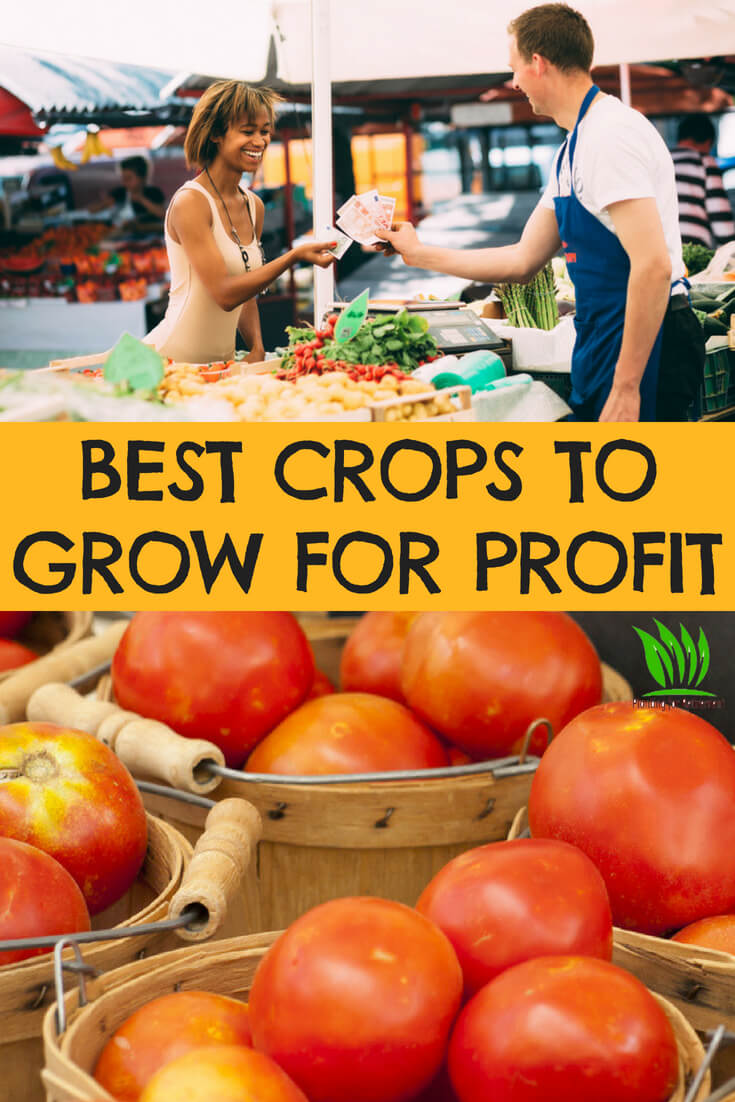 In urban gardening and where space is limited, space and crop yield are critical for getting the most produce yield possible, while also growing in order to save  on your foo bill. So what to grow that will produce the greatest yield in the least amount of space is important to know.